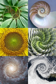 natural examples of golden spiral