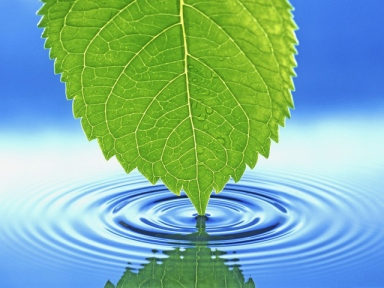 Ripples and Leaf